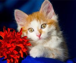 Ищут дом замечательные котята Альфа,Мышка и Рыжик. - фото 1 к объявлению