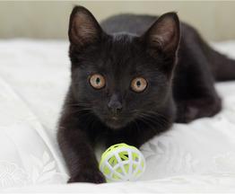 Котенок Алиса в добрые руки! - фото 1 к объявлению
