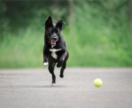 Миниатюрная собака в добрые руки. - фото 1 к объявлению
