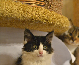 Очаровательный котенок Мурка ищет дом. - фото 1 к объявлению