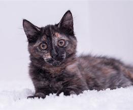 Котёнок Даша в добрые руки - фото 1 к объявлению