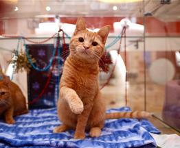 Независимый кот Кекс ищет дом. - фото 1 к объявлению