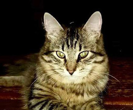 Молодой котик Антоша ждет своего человека - фото 1 к объявлению