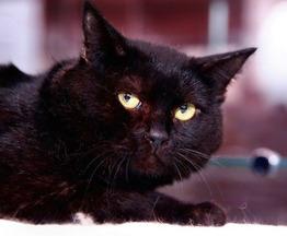 Арап - милый, нежный и застенчивый котик. - фото 1 к объявлению