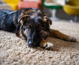 Привет! Классный щенок ищет свой дом. - фото 1 к объявлению