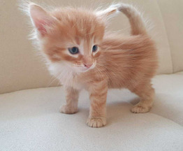 Котята ищут заботливых хозяев - фото 1 к объявлению