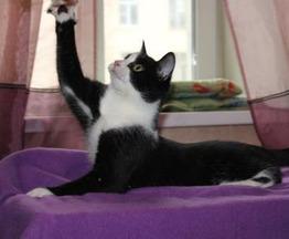Добрейший котик-подросток ищет заботливых хозяев - фото 1 к объявлению