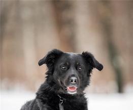 Красивый пёс Крис в добрые руки. - фото 1 к объявлению