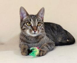 Котенок Варя в дар - фото 1 к объявлению