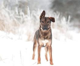 Чудесный годовалый пес Элвин ищет семью. - фото 1 к объявлению