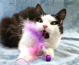 Котик Амур - фото 1 к объявлению