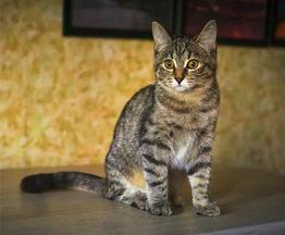 Кошечка Альфа в добрые руки - фото 1 к объявлению
