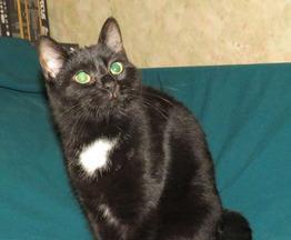 Кошка Зая ищет дом - фото 1 к объявлению