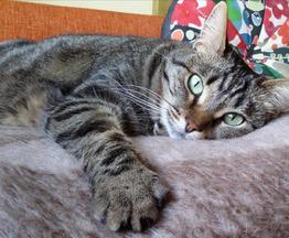 Очаровательная кошечка Муся ищет дом. - фото 1 к объявлению