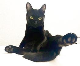 Чёрная кошка в добрые руки - фото 1 к объявлению