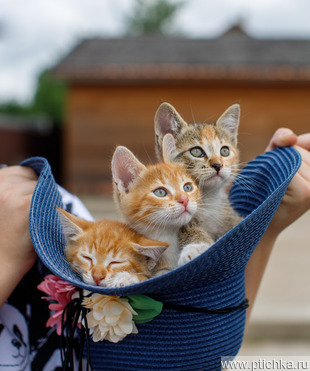 Очаровательные котята-сестрички в добрые руки! - фото 1 к объявлению