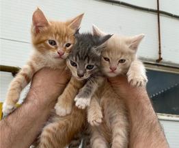 Ласковые и любознательные котята ищут ответственных хозяев. - фото 1 к объявлению