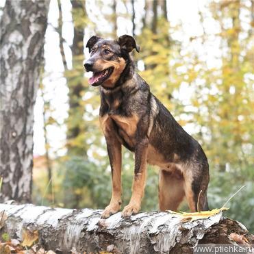 Чудесная собачка Фиона ищет семью. - фото 1 к объявлению