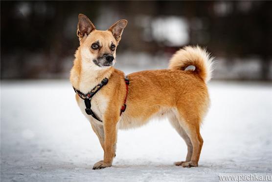 Маленькая собака Сури в добрые руки. - фото 1 к объявлению
