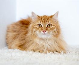 Рыжие котята мальчики в добрые руки. - фото 1 к объявлению