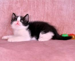 Котенок Никас ищет самых лучших хозяев. - фото 1 к объявлению