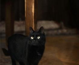 Кошечка Масяня ищет семью. - фото 1 к объявлению