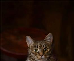 Кошечка Стеша ищет семью. - фото 1 к объявлению