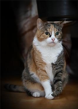 Молодая кошечка Даша в дар! - фото 1 к объявлению