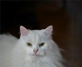 Котик Шурик ищет семью. - фото 1 к объявлению