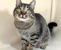 Умный котик Чипс - фото 1 к объявлению