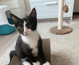Котенок Арчи ищет дом! - фотография  к объявлению