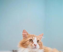 Котенок Лева - фото 1 к объявлению