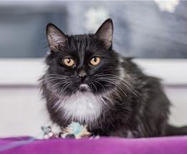 Чудесный котик Марсик ищет дом! - фото 1 к объявлению