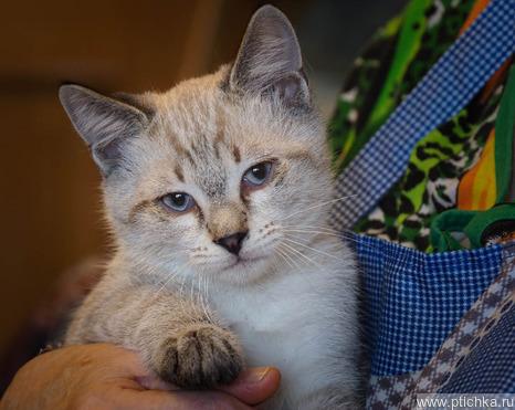 Ищем добрые руки для маленьких котят - фото 1 к объявлению