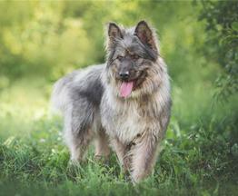 Красивая собака в добрые руки. - фото 1 к объявлению