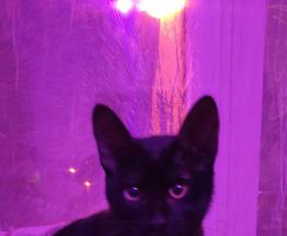 Чёрная Кошка ищет заботливых хозяев - фото 1 к объявлению