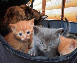 Семеро очаровательных котят ищут свой дом! - фото 1 к объявлению