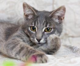 Очаровательный котенок Джеймс ищет семью. - фото 1 к объявлению