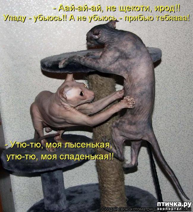 фото 1: Смешные котоматрицы про СФИНКСОВ