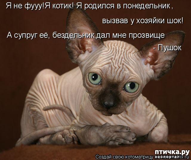 фото 3: Смешные котоматрицы про СФИНКСОВ