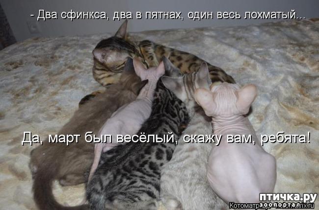 фото 5: Смешные котоматрицы про СФИНКСОВ