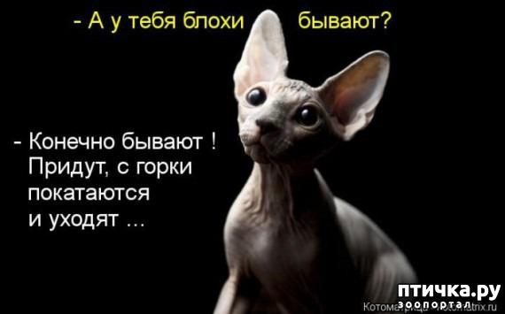 фото 6: Смешные котоматрицы про СФИНКСОВ