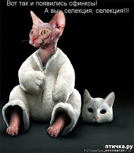 фото 7: Смешные котоматрицы про СФИНКСОВ