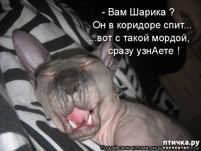фото 8: Смешные котоматрицы про СФИНКСОВ