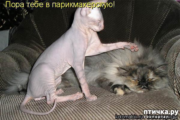 фото 9: Смешные котоматрицы про СФИНКСОВ