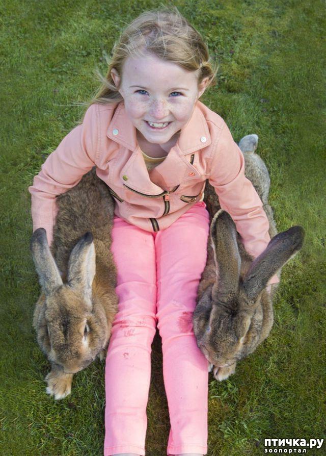 фото 4: Вот как выглядит самый большой в мире кролик