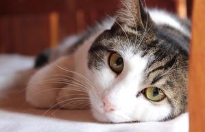 фото: Мама-кошка устроила скандал с битьем посуды...
