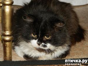"""фото: """"В нашем доме кот живёт"""" (шуточный стих про кота Георгия)"""