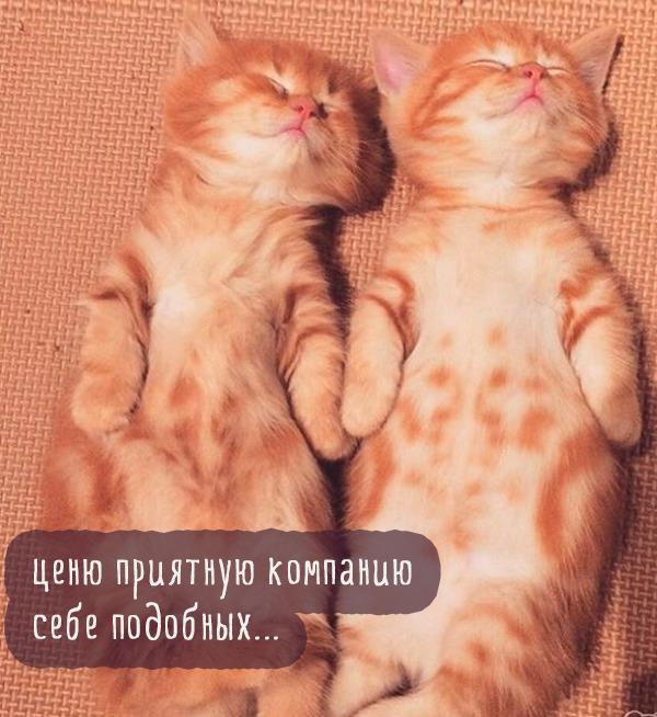 фото 2: Котоматрица: С кем спать?