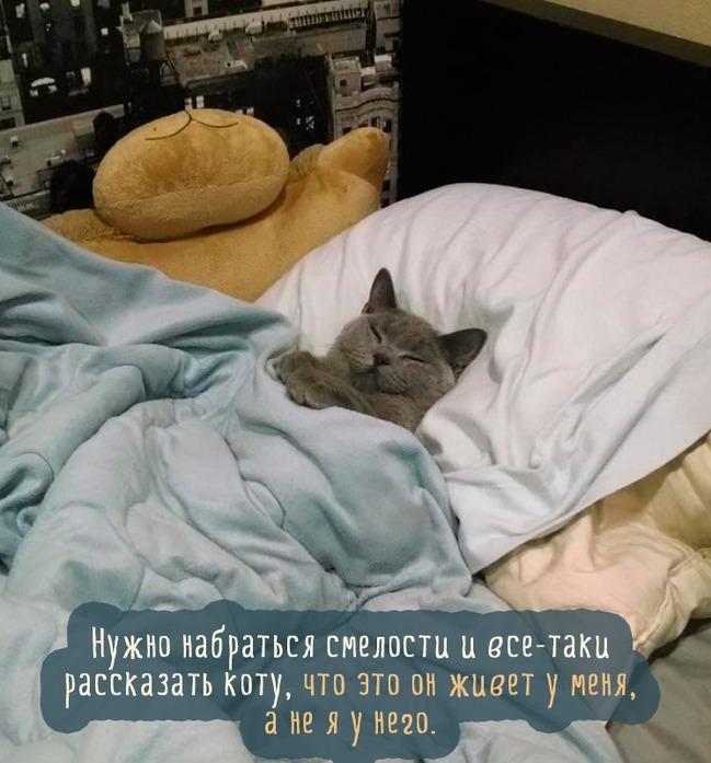 фото 4: Котоматрица: С кем спать?